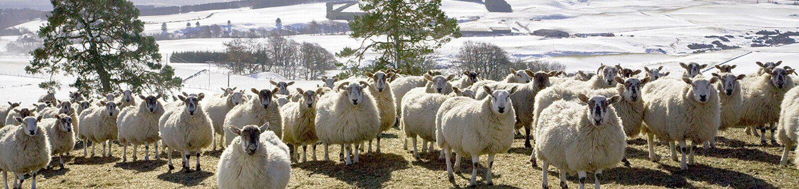 Farm Vet Carlisle