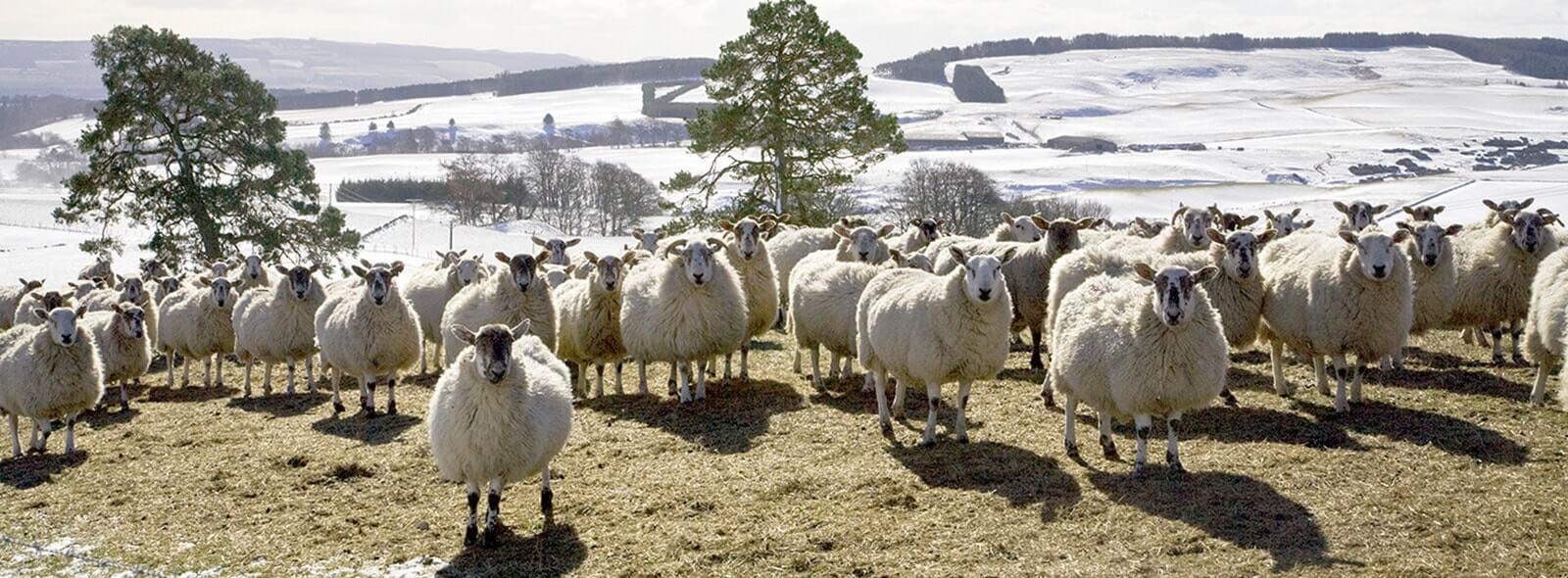 Farm Vet Cumbria