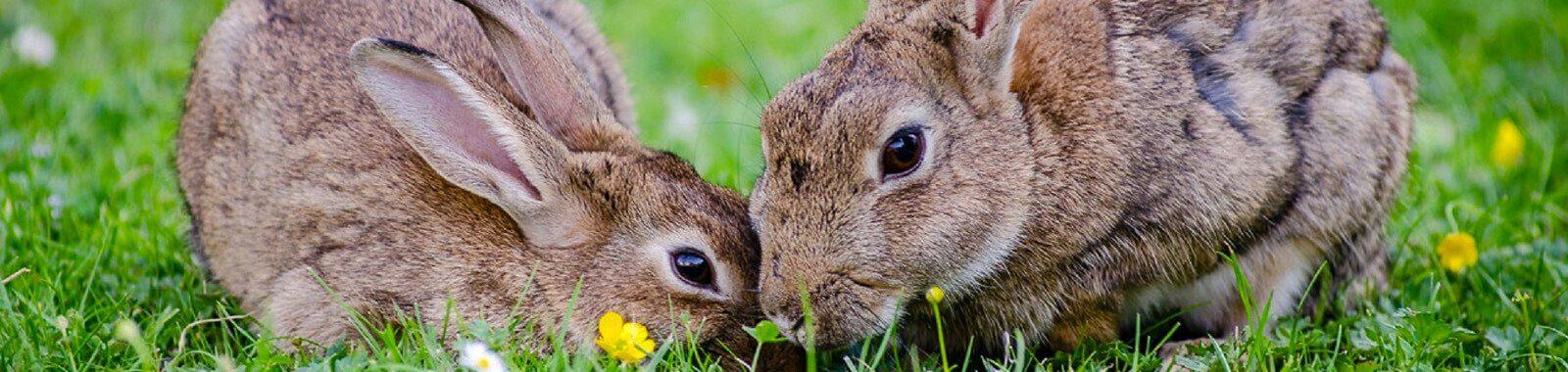 Small Animal Vets Carlisle